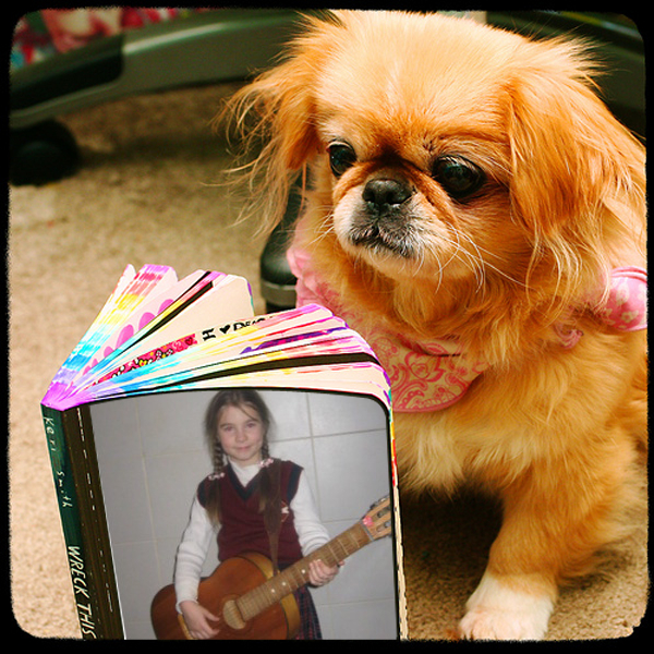 little-dog-reading-the-book-1dfaygmwx