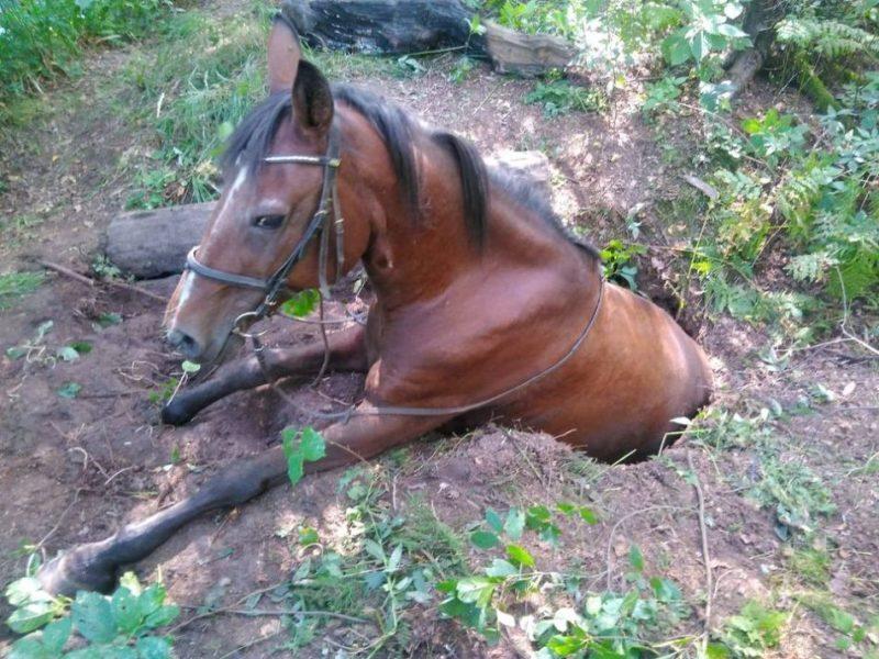Foto: Ugunsdzēsēji glābēji izglābuši zemē iebrukušu zirgu