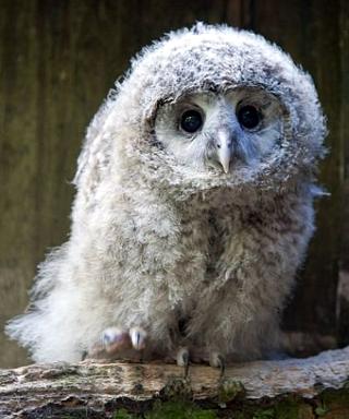 cute-owls-01